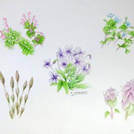 春の草:吉本一彦