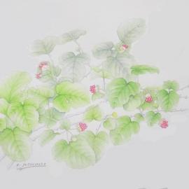 ナワシロイチゴ(吉本一彦)