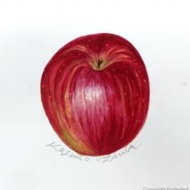 リンゴ(小澤和子)