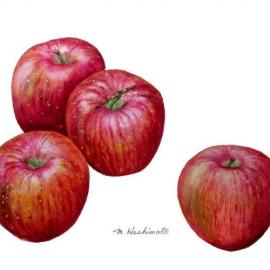 リンゴ 'フジ'