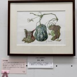 メロンカボチャ(前田美稲)