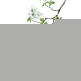 白い花の樹