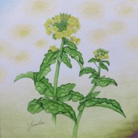 菜の花(國定泰子)