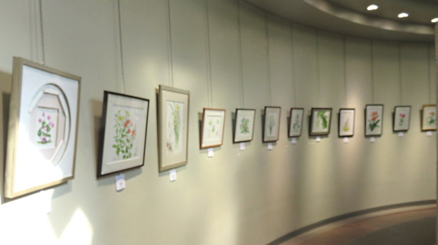 春日井植物画同好会「四季彩」早春展です。