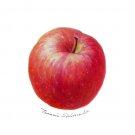 リンゴ:島田珠美