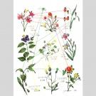 里山の草花, 予測アイトラッキング