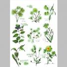 里山の草花, 注視部