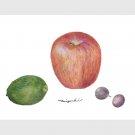 リンゴ、ブドウ、レモン:落合美幸