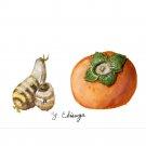 サトイモと柿:戎家友己枝