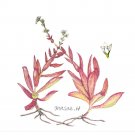 多肉植物:長谷川聖恵