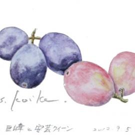 名張のブドウ:巨峰と安芸クイーン