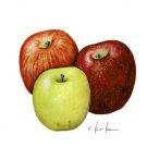 リンゴ3兄弟