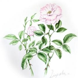 西井聖子2017バラ