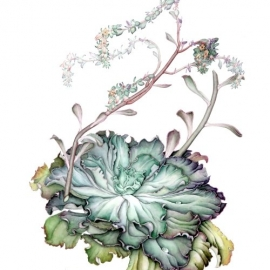 伊藤みゆき2017多肉植物