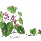 フユイチゴ(藤川悟)